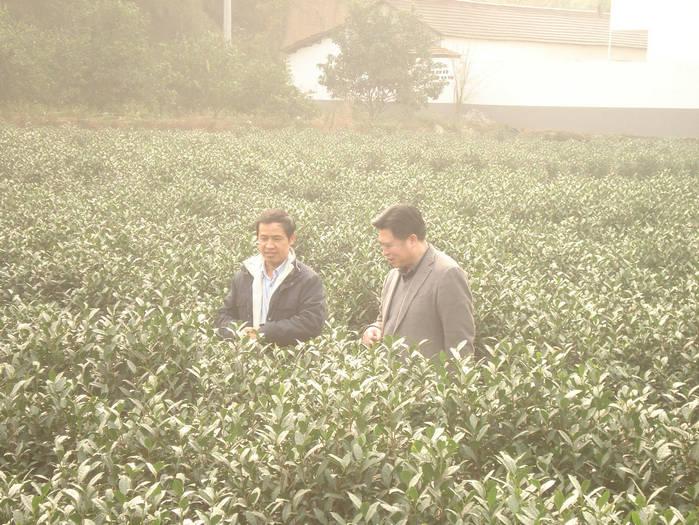 中国农科院首席科学家邱德文博士应本公司邀请在丽水大港头镇讲课